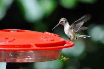 Photo by Lynn Nash on Pexels.com