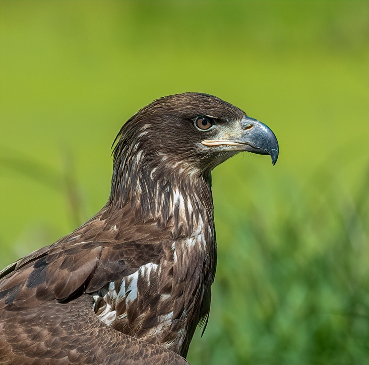 Whoo's Woods Eagle Pic #2